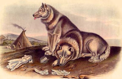 Early Domesticated Dogs