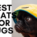 best dog coats for pugs