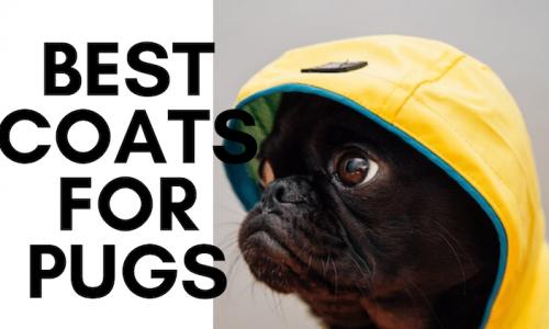 best dog coats for pugs