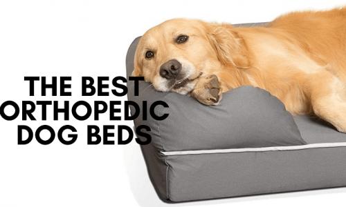 best othopedic dog beds