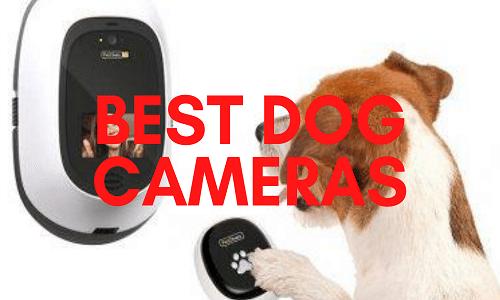 Best Dog Cameras UK