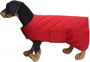 Geyecete Martin Thermal Dog Winter Coat
