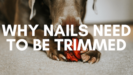 why nails need to be trimmed
