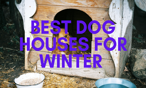 best dog houses for winter